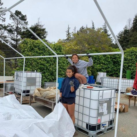 Seniors Julia Chow and Serafina Carlucci work on their group aquaponics capstone project.